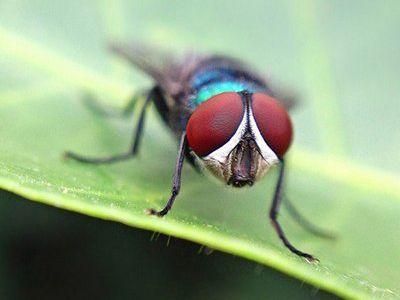como nacen las moscas