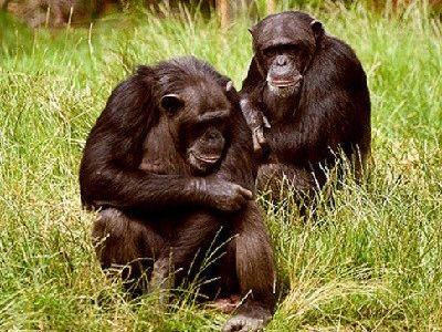 como nacen los monos