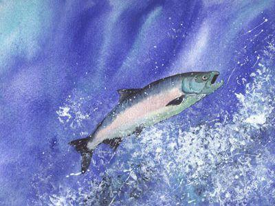 que come el salmon