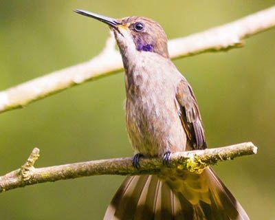 como nacen los colibris