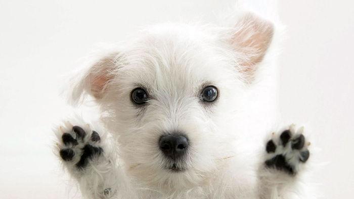 Informacion completa sobre los perros