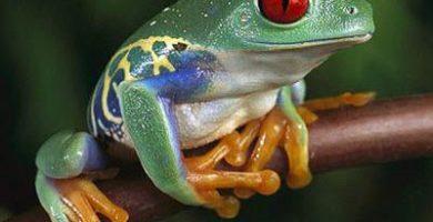 como nacen los anfibios