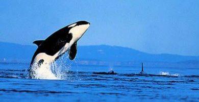 como nacen los animales marinos