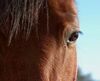 como nacen los caballos