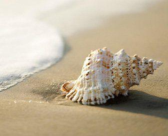 como nacen los caracoles de mar