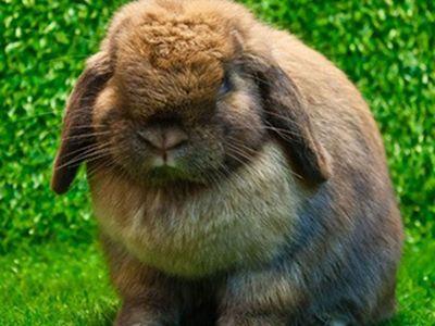 como nacen los conejos