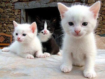 como nacen los gatos