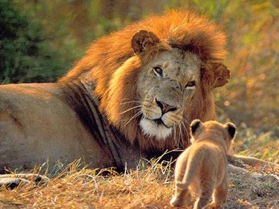 como nacen los mamiferos