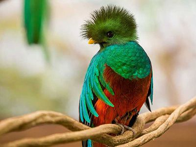 Image result for quetzal