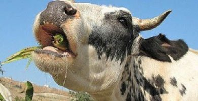 que comen los mamiferos