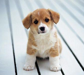 como nacen los cachorros