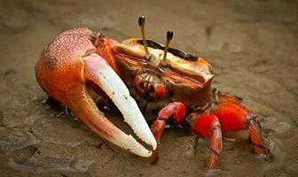 donde viven los cangrejos