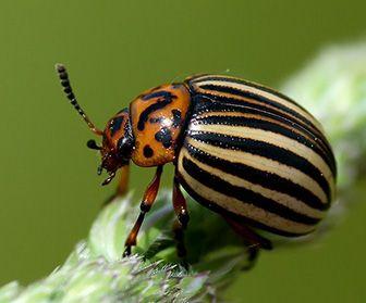 donde viven los escarabajos
