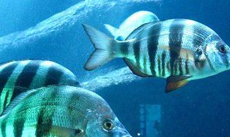 donde viven los peces