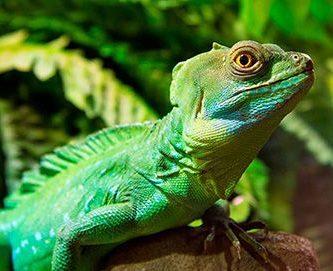 donde viven los reptiles
